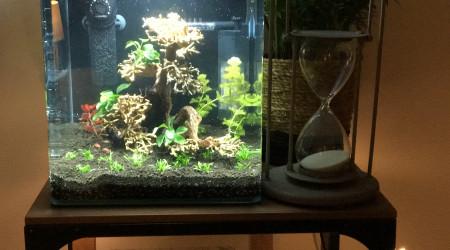 aquarium Dennerle 35L Betta