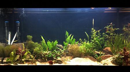 aquarium Biotope amazonien Guyane
