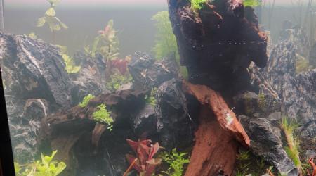 aquarium Bac Rouen