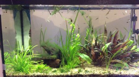 aquarium Endler
