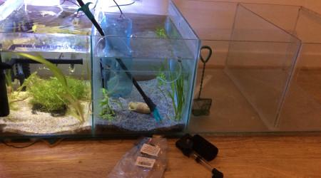 aquarium Bacs pour alevins