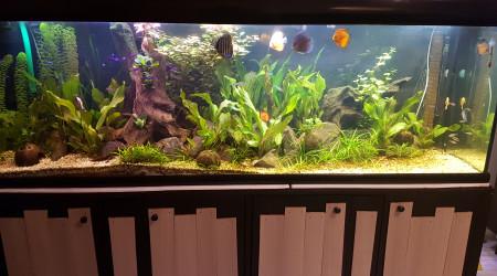 aquarium 600l