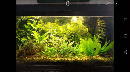 aquarium 80litres planté