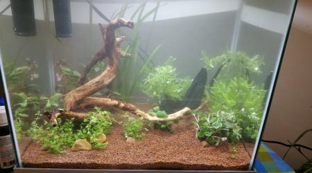 aquarium jaja