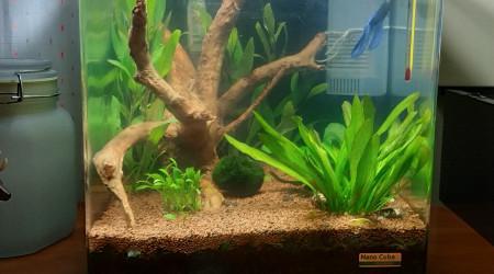 aquarium Nano v2
