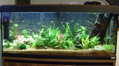aquarium corydo