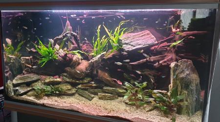 aquarium Bac à Tetras