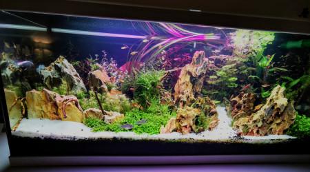 aquarium Communautaire 1