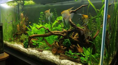 aquarium 360l amazonien