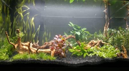 aquarium Protobac