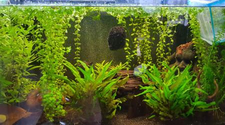aquarium 245 litres