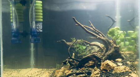 aquarium Na Style 2