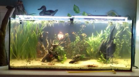 aquarium Bac low tech 240l