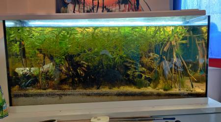aquarium Asiatique 180