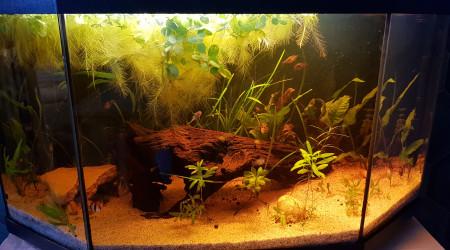aquarium Dom