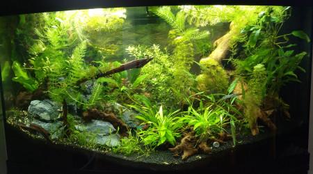 aquarium Nouveau 180 projet aquascape