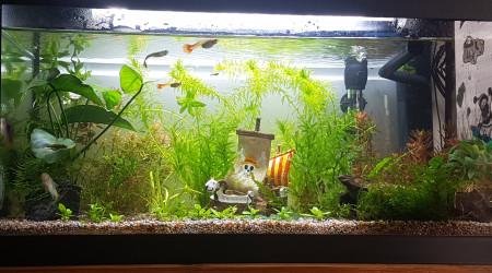 aquarium One piece