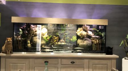 aquarium ciclhidés malawi
