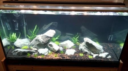 aquarium bac1