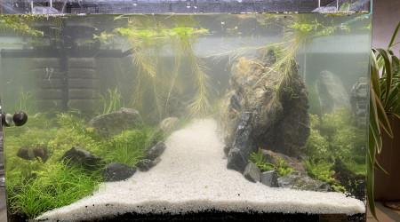 aquarium Scaper Tank Aquascape crevette