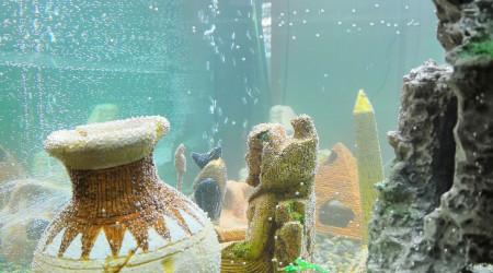 aquarium commun