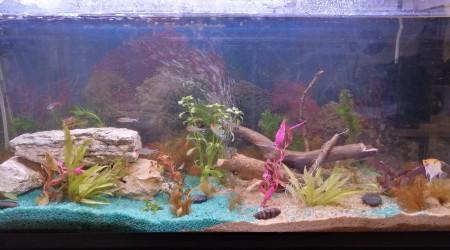 aquarium aqua 120