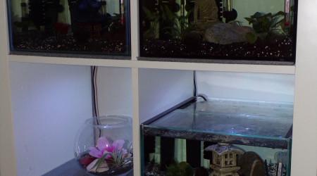 aquarium Aqua Kalax BETTA