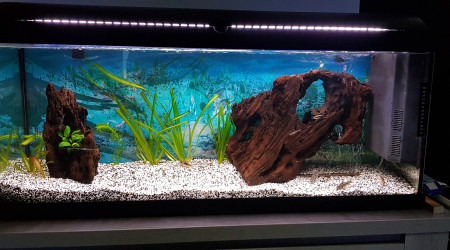 aquarium Aquarium  communaitaire 120l