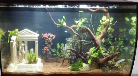 aquarium Ollie