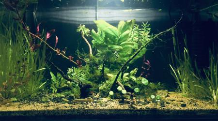aquarium Nouveau 4