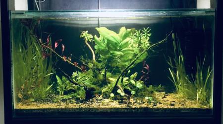 aquarium Plantes aqua dry
