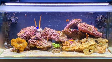 aquarium Debut Recifal