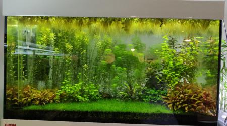 aquarium Crevettes 126L