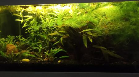 aquarium 50 litres asiatique LOW TECH