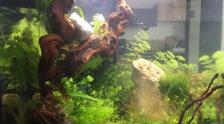 aquarium LePoissonRouge