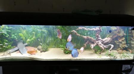 aquarium discoli