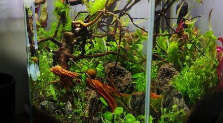 aquarium Le monde perdu