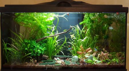 aquarium FirstOne