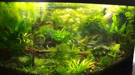 aquarium Jungle 180