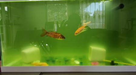 aquarium Vénicia