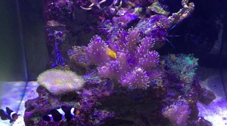 aquarium Nano récifal 60 l