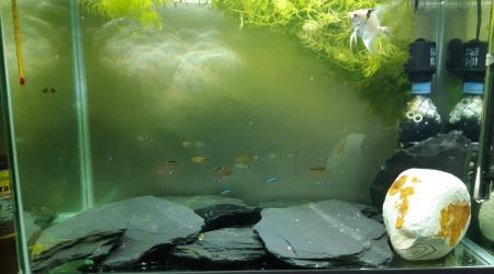 aquarium Aquarium 100 litres