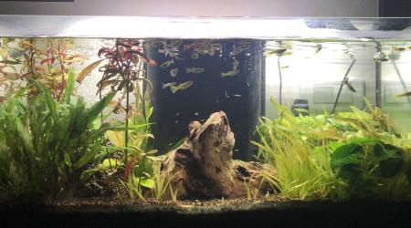 aquarium Bac Principal