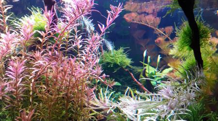 aquarium WildChild