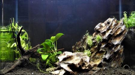 aquarium DEEP TIK G