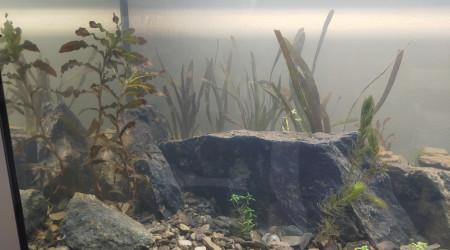 aquarium LocalWild