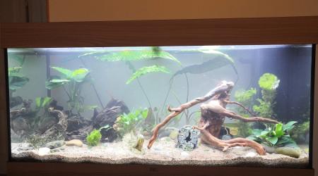 aquarium Juwel Rio 180l