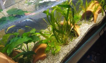 aquarium Aquarium a Ambystoma mexicanum