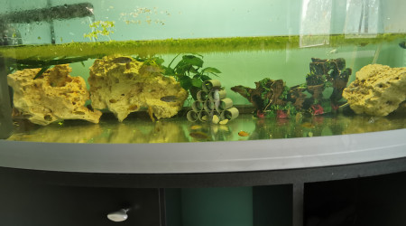 aquarium Bac Bébé Cichlidés