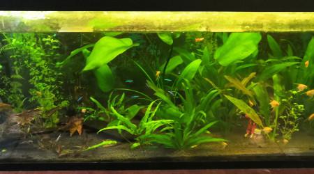 aquarium Aquarium 240L